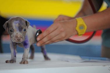 Dermatologia animal previne e trata doenças de pele em cães