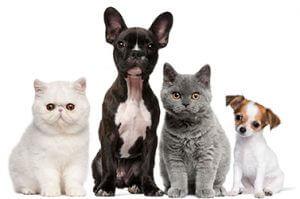 Microchip para animais de estimação