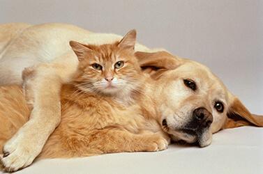 Dermatologia veterinária quais os principais problemas que ela trata