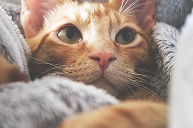 Guia Completo de Como Cuidar de Gato: Do Filhote ao Idoso