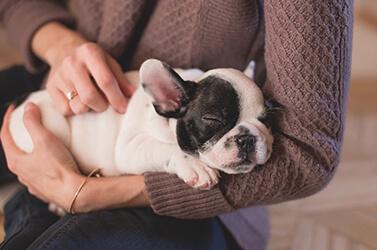 Como cuidar de filhotes de cachorro: Dicas sobre tudo que você precisa saber