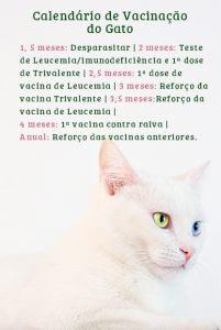 calendário de vacinação de gato