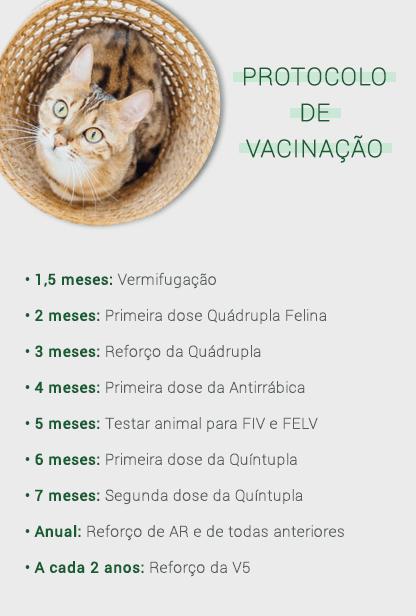 protocolo de vacinação de gato