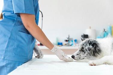 Cachorro fica gripado? Como identificar e tratar seu bichinho