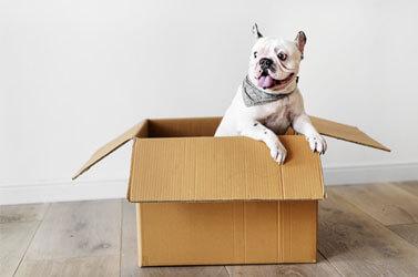 4 Dicas para Adoção de Cachorro com Segurança