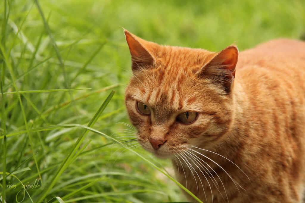 Graminha Para Gatos — 5 Razões Para Ter Em Casa