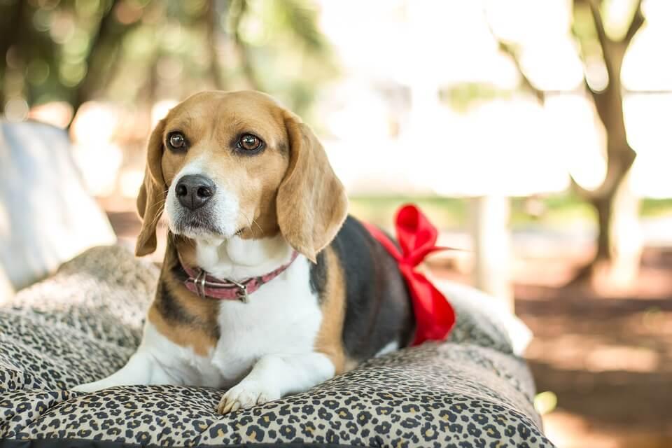 Gestação Canina — Minha Cadela Está Grávida?