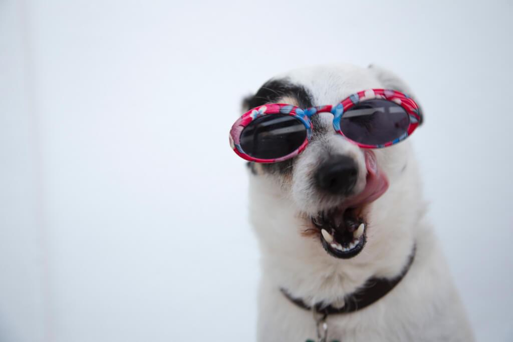 Conheça 6 Nomes De Cachorros Famosos Da Web