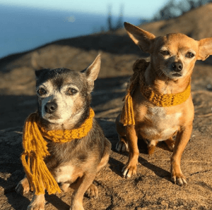 nomes de cachorros famosos estopinha capixaba