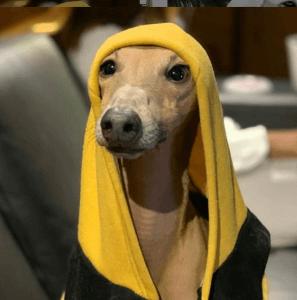 nomes de cachorros famosos plínio