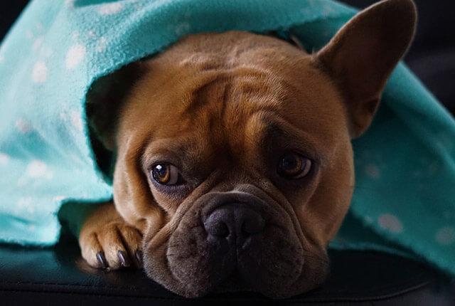 5 Dicas de Como Aumentar a Imunidade do Cachorro
