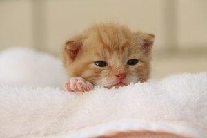 como dar banho em gato filhote