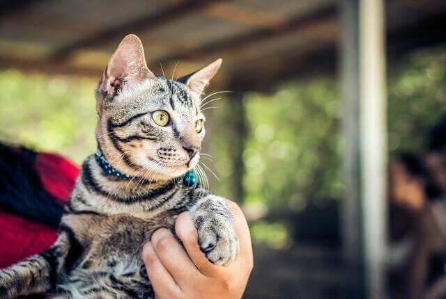 Chip Para Gatos: Vale a Pena Colocar?