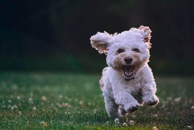 Importância da Castração de Cachorro Para Ter um Pet Saudável