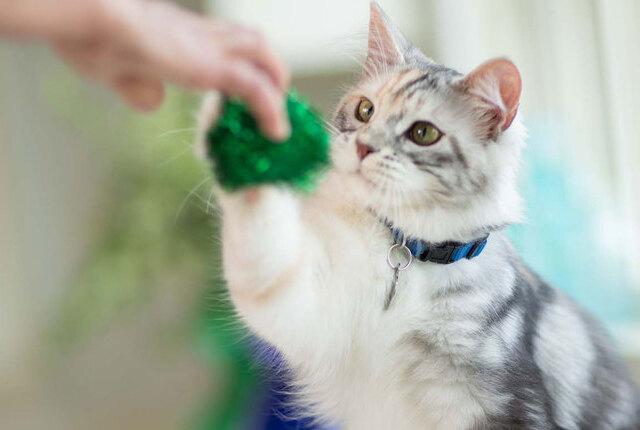 Adestramento de gatos: dicas para o treinamento dos felinos