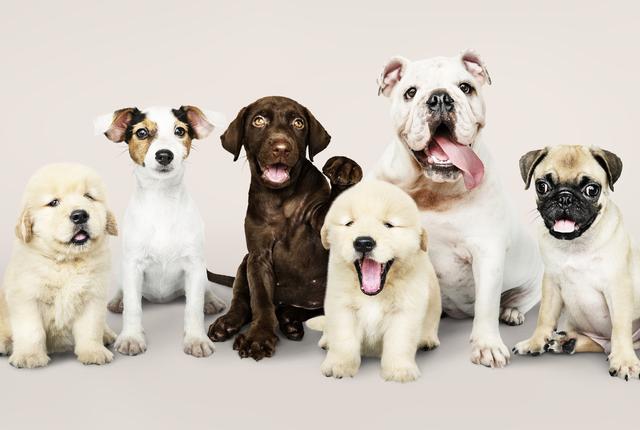 Conheça 5 raças de cachorros extintas que você não conhecia!