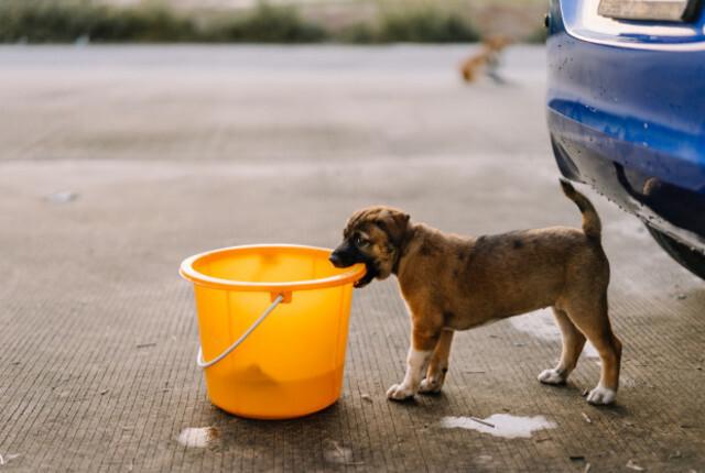 Como fazer cachorro parar de morder: dicas essenciais