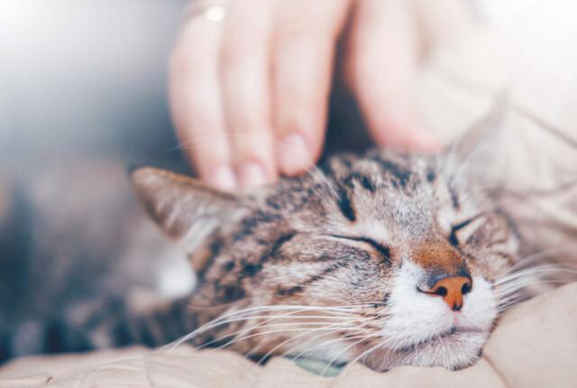 Onde fazer carinho no gato: veja algumas dicas