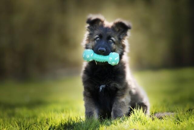 Como fazer brinquedos para cachorro caseiros, fáceis e baratos