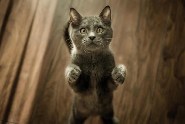 Como fazer um arranhador para gatos: passo a passo