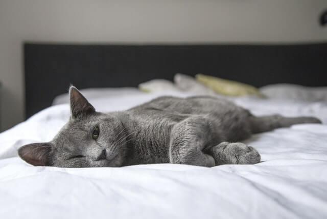 Como saber a idade de um gato: conheça os principais indicativos