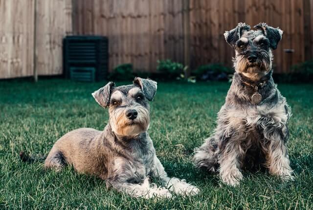 Microchip para cachorro – Vale a pena?